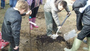 Plot Tree Planting